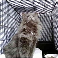 Adopt A Pet :: Lady Heather - Jenkintown, PA