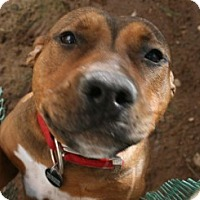 Adopt A Pet :: Elvira - Tempe, AZ