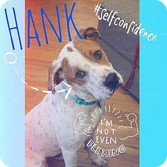 Bulldog/Hound (Unknown Type) Mix Dog for adoption in Marietta, Georgia - Hank