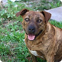 Adopt A Pet :: Carmello - Davie, FL