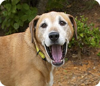 Labrador Retriever Mix Dog for adoption in Woodstock, Georgia - Cooper