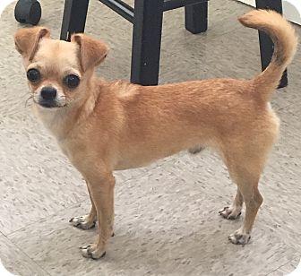 Chihuahua Dog for adoption in McDonough, Georgia - Ethan