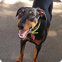 Adopt A Pet :: Kiwi--pending - New Richmond, OH