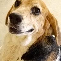 Adopt A Pet :: Flash - Melrose, FL