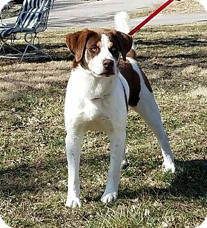 Husky Mix Dog for adoption in Atchison, Kansas - Buddy