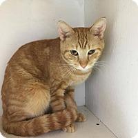 Adopt A Pet :: Pluto - Orleans, VT