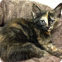 Adopt A Pet :: Sparrow - River Edge, NJ