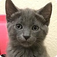 Adopt A Pet :: Ashton - LaJolla, CA