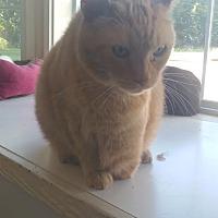 Domestic Shorthair Cat for adoption in Fort Scott, Kansas - Trip