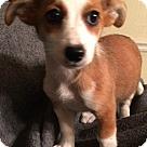 Adopt A Pet :: Charla