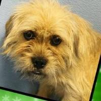 Adopt A Pet :: Baxter - Fairfield, OH