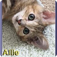 Adopt A Pet :: Allie - Aldie, VA
