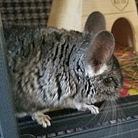 Adopt A Pet :: Nike - Lindenhurst, NY