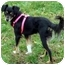 Photo 3 - Manchester Terrier/Papillon Mix Dog for adoption in Overland Park, Kansas - Pebbles