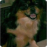 Adopt A Pet :: Flower - dewey, AZ