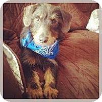 Adopt A Pet :: Luke - Silsbee, TX