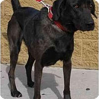 Adopt A Pet :: Spencer - Gilbert, AZ