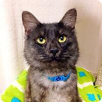 Adopt A Pet :: Cash - Foothill Ranch, CA