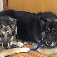 Adopt A Pet :: Liz - Kouts, IN