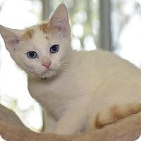 Adopt A Pet :: Justice - Medina, OH