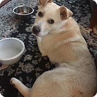 Adopt A Pet :: Millie - Saskatoon, SK