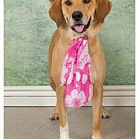 Adopt A Pet :: Missy - Towson, MD