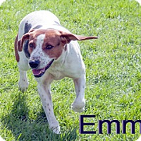 Adopt A Pet :: Emmy - Hamilton, MT