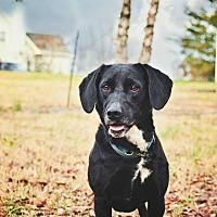 Adopt A Pet :: Freda - Fayetteville, GA