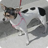 Adopt A Pet :: Bella - Umatilla, FL