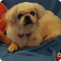 Adopt A Pet :: Mickey - Vacaville, CA