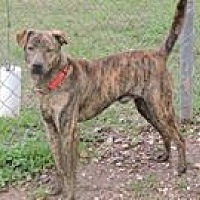 Adopt A Pet :: Patches - Cottonport, LA