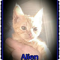 Adopt A Pet :: Alien - Richmond, CA