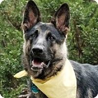 Adopt A Pet :: Duncan - Denver, CO