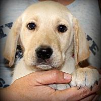 Adopt A Pet :: Michael - Southbury, CT