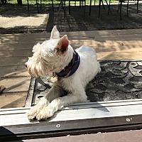 Adopt A Pet :: Buddy - Sharonville, OH