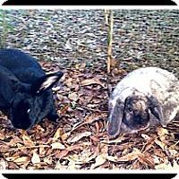 Adopt A Pet :: Eeyore & B@B@ - Williston, FL