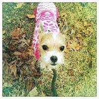 Adopt A Pet :: Juliette - Rockaway, NJ