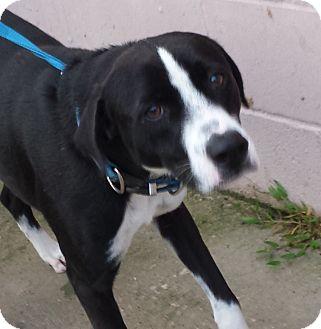Border Collie Mix Dog for adoption in Kingwood, Texas - Leo
