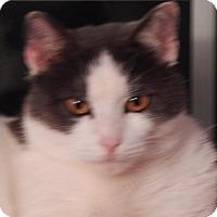 Adopt A Pet :: Dixon - N. Billerica, MA