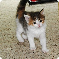 Adopt A Pet :: Kendall - Mount Mourne, NC