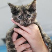 Adopt A Pet :: Sarah - Robinson, IL