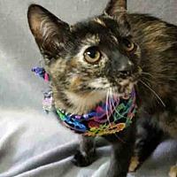 Adopt A Pet :: Umbra - Gahanna, OH
