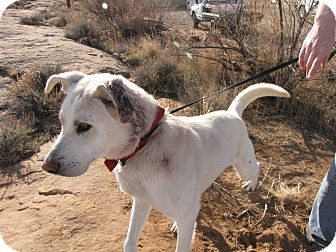 Husky/Shepherd (Unknown Type) Mix Dog for adoption in Roosevelt, Utah - Kenai