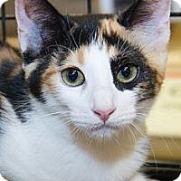 Adopt A Pet :: Catarina - Irvine, CA