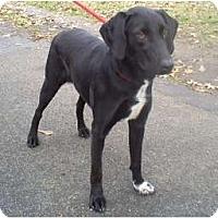 Adopt A Pet :: Merry - Courtesy post - Glastonbury, CT