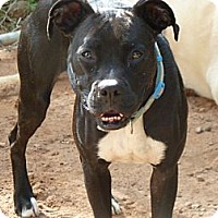 Adopt A Pet :: Pickles - E Windsor, CT