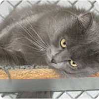 Adopt A Pet :: Destini - Anchorage, AK