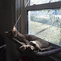 Adopt A Pet :: Radcliffe - Clarkson, KY