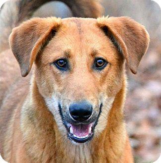 Hound (Unknown Type)/Shepherd (Unknown Type) Mix Dog for adoption in Broadway, New Jersey - Bandit