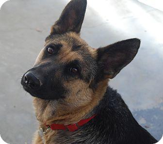 German Shepherd Dog Dog for adoption in Glendale, California - REESE